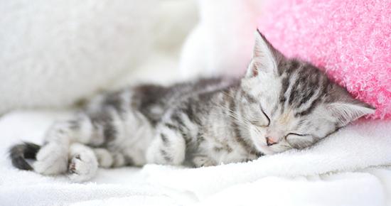 熟睡中の子猫