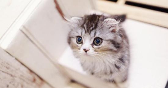 上を見つめるオス猫