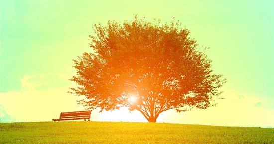 草原に光る木漏れ日
