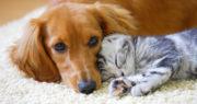 仲が良い犬と猫