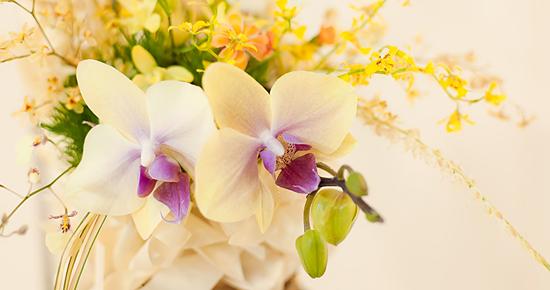 花開く洋ラン