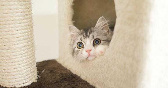 タワーから顔を出す猫
