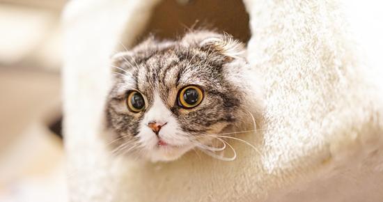 箱から顔を出す猫